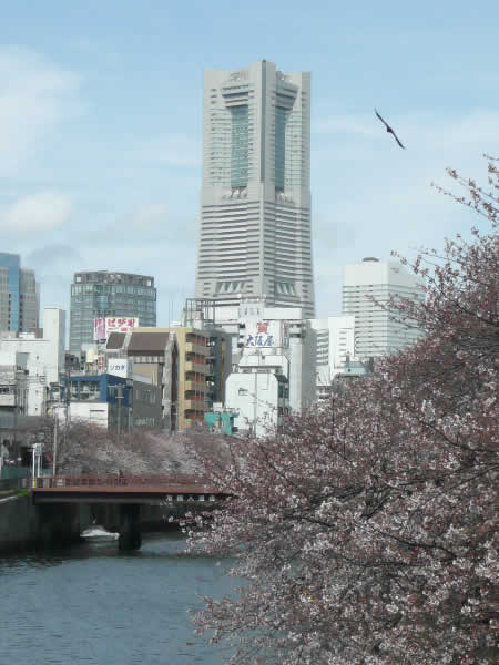 Yokohama_april